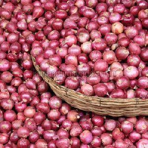 Fresh Small Onion