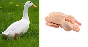 Fresh Duck Meat