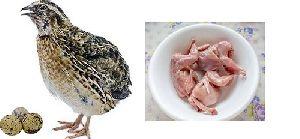 Fresh Quail Meat