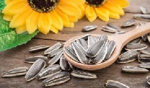 Organic Sunflower Seeds