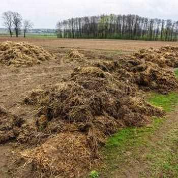 Organic Cow Dung Fertilizer
