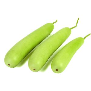 Fresh Green Bottle Gourd