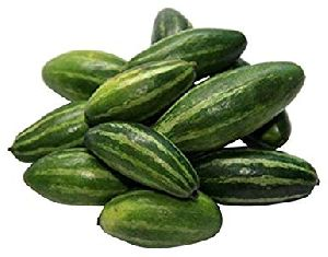 Fresh Natural Pointed Gourd