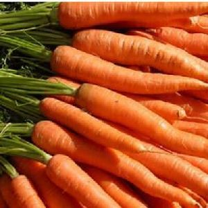 Fresh Red Carrot