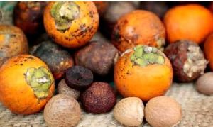 Natural Areca Nuts
