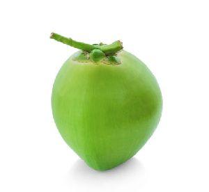 Fresh Coconut Exporter & Supplier Tirunelveli India