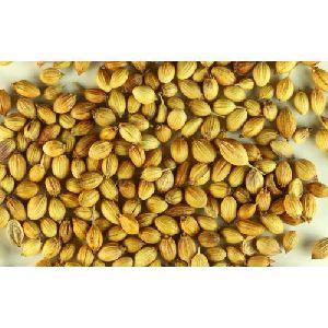 Organic Coriander Seeds