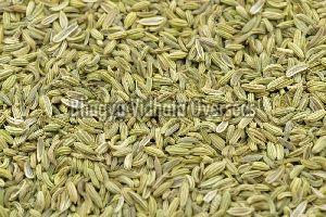 Premium Fennel Seeds