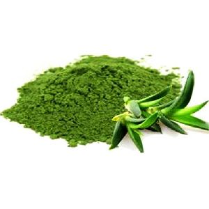 Aloe Vera Dried Powder