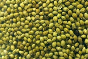 Green Coriander Seeds