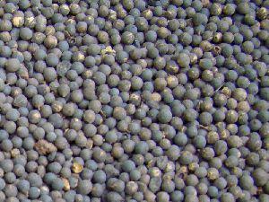 Vidanga Embelia Ribes