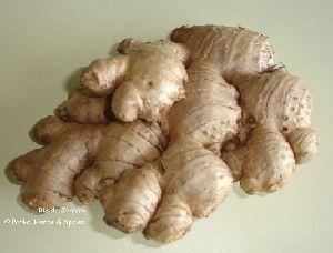 Fresh Ginger Reo De Geneiro