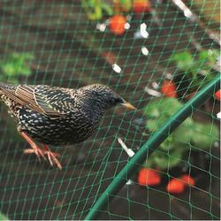 Birds Safety Net