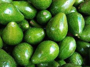 Fresh Avocado 01