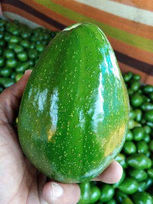 Fresh Avocado 03