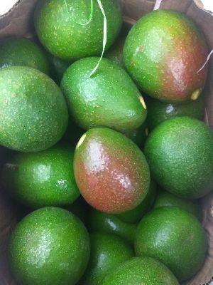 Fresh Avocado 04