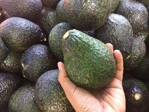 Fresh Avocado 05