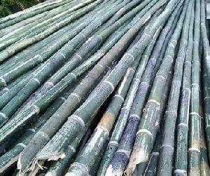 Assam Special Bamboo