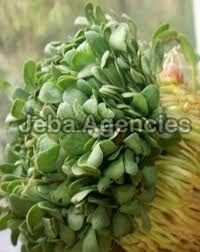 Fresh Paruppu Leaves