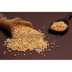 Fresh Jowar Seeds