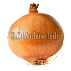 Fresh Brown Onion