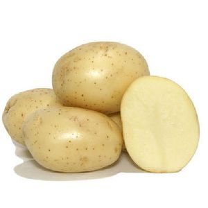 Fresh Badshah Potato