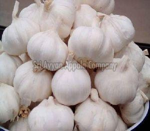 Fresh Whole Garlic