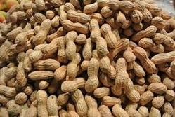 Loose Form Groundnut