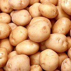 ZIGS ENTERPRISE - Fresh Vegetables Manufacturer Exporter in Lunawada
