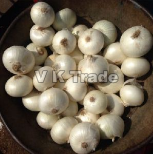 Fresh Small White Onion