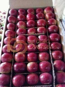Indian Red Apples