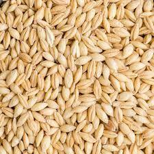Organic Barley Seeds