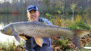 Whole Grass Carp Fish