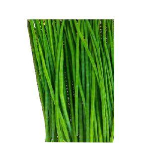 Green Drumsticks