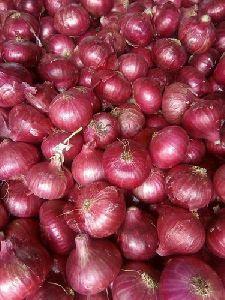 Hybrid Red Onion