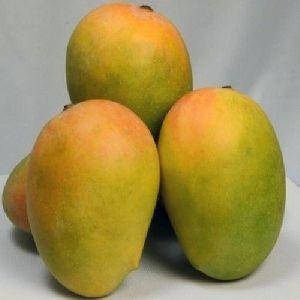 Jumbo Kesar Mango