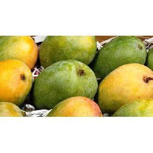 Natural Kesar Mango