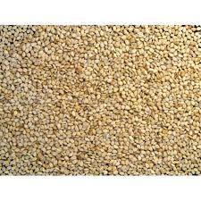 Sortex Sesame Seeds
