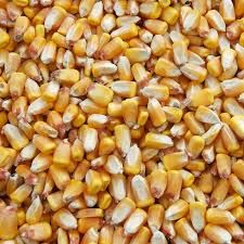 Whole Yellow Corn Kernels