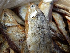 Dried Hilsa Fish