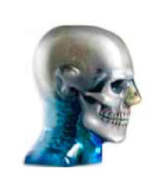 Dental & Diagnostic Head Phantom