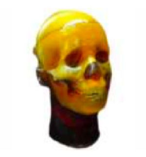 MRI Anthropomorphic Head Phantom