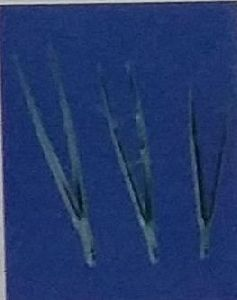 Thumb Forceps