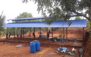 Dairy Open Type Shed Construction Services