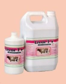 Livor T Liver and Kidney Tonic