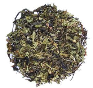 Stevia Green Tea