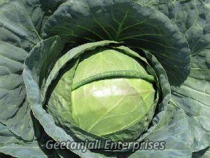 Fresh Hybrid Cabbage