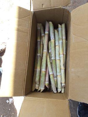 Fresh Sugarcane 01