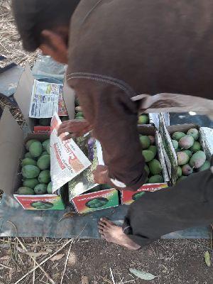 Kesar Mango 09