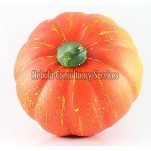 Fresh Baby Pumpkin
